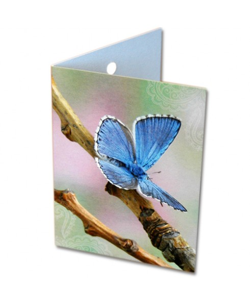 Klein wenskaartje vlinder