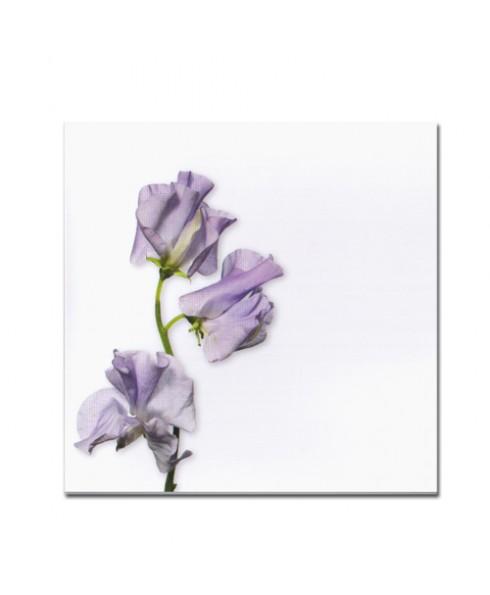 Wenskaart Lila bloem