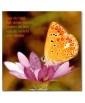 Rups... vlinder 2