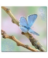 Vlinder wenskaart
